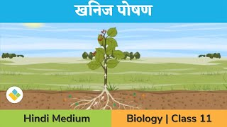 Mineral Nutrition | Deficiency Symptoms | Toxicity | Translocation of Solutes | in Hindi thumbnail