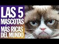 Top 5 - Las 5 Mascotas más ricas del mundo