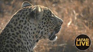 safariLIVE - Sunset Safari PART 2 - September 11, 2018