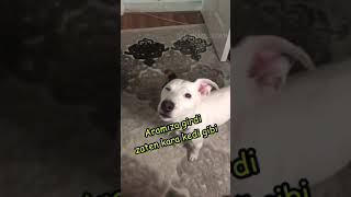 Sapık köpek dişi köpeği duyunca çıldırıyor 😆😆