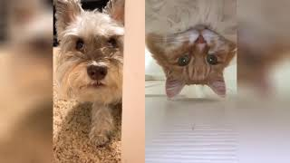 Funny Dog - Smarty Dogs | Funny Dog Video Compilation #2