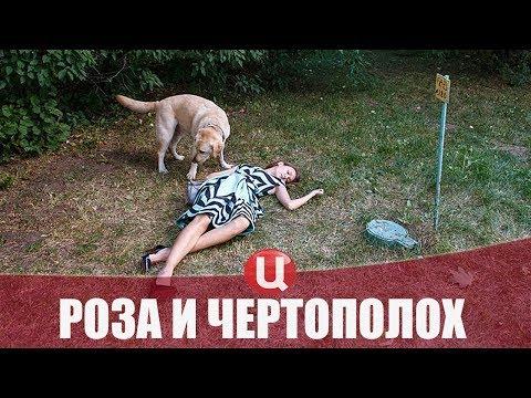 Сериал Роза и чертополох (2018) 1-2 серии мелодрама на канале ТВЦ - анонс