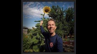 Sunflower Garden, Sunflower Farm - Gardening with LARÉ update, August 1, 2019