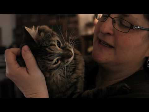 Meet Forte | Tenth Life Cat Rescue