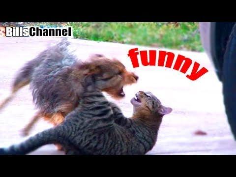 EPIC CAT VS. DOG FIGHT
