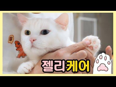 고양이 젤리 케어 - 촉촉한 핑크젤리를 되찾자!