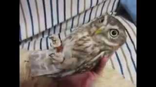 Rocking Owl thumbnail