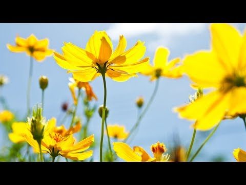 """Peaceful Music, Relaxing Music, Instrumental Music, """"Soaring Beauty"""" by Tim Janis"""