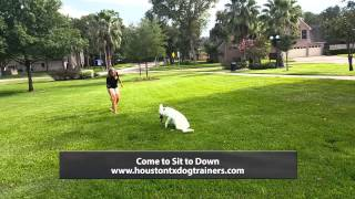 Cinderella Before And After Board And Train Program - Off Leash K9 Training Houston
