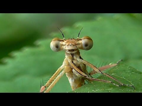 Мир насекомых. Бабочки и стрекозы