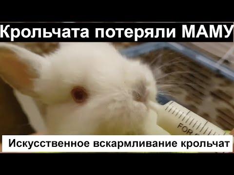 Вопрос: Какие болезни передаются через молоко у кроликов Или молоко стерильное?