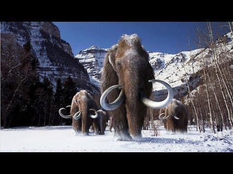 Мамонты и мифы.  При каких условиях замерзли мамонты.