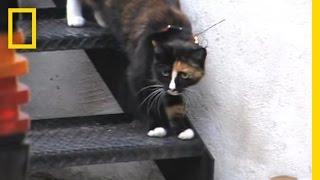 Killer Housecats