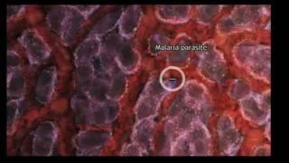 Astonishing molecular machines: Drew Berry at TEDxSydney