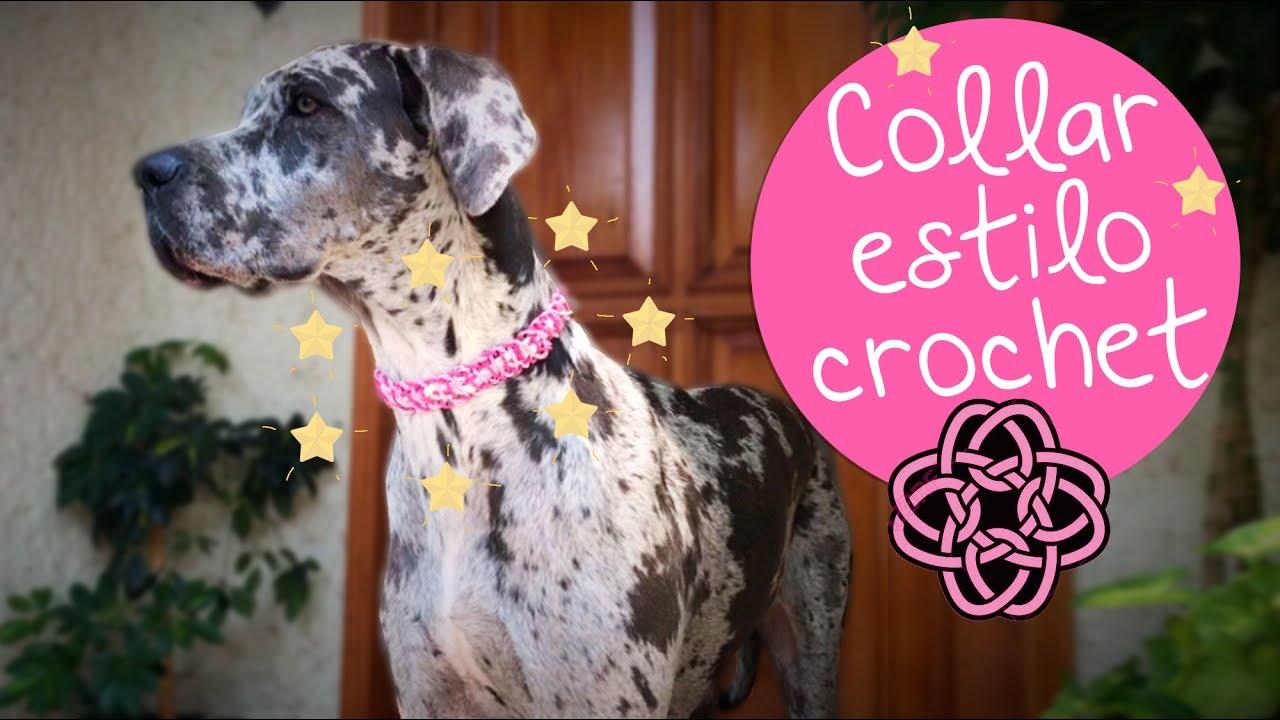 Collar para Mascotas de Nudos estilo Crochet :: Diy PetLovers ...