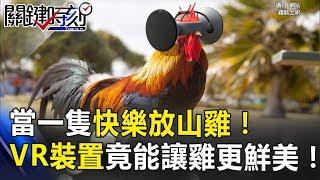當一隻快樂放山雞!VR裝置竟能讓飼養雞更鮮美好吃! 關鍵時刻 20171117-2 朱學恒