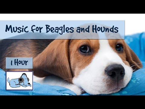 Relaxing, Calming, Soothing Dog Music – Perfect for Beagles and Hounds! Beagle Music.