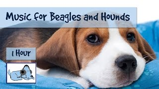 We love Beagles and hounds here at Relax My Dog, so we decided to m...