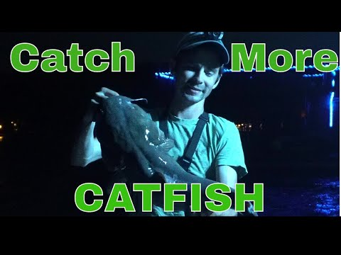 How To Catch Tons Of Catfish With No Effort - Dock Lines