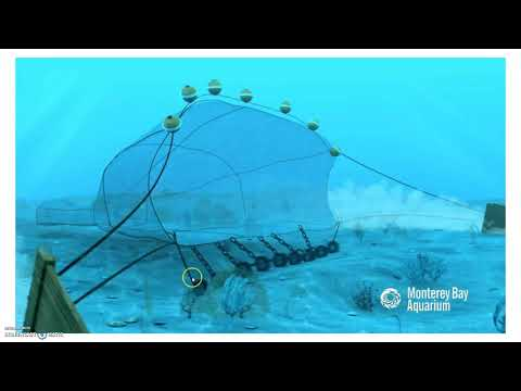 5.8 Impacts Of Overfishing