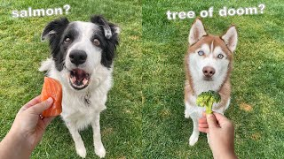 Dogs Review Different Human Foods! *Taste Test*