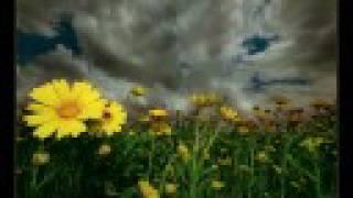 Dark Sanctuary-The Garden Of Jane Delawney