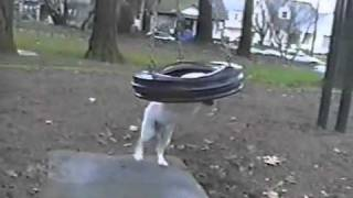 Bulldog On The Tire Swing- Pettube