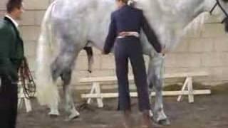Repeat youtube video feria del caballo trujillo