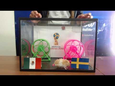 Prediksi Mexico Vs Swedia Bersama PO  Si Hamster