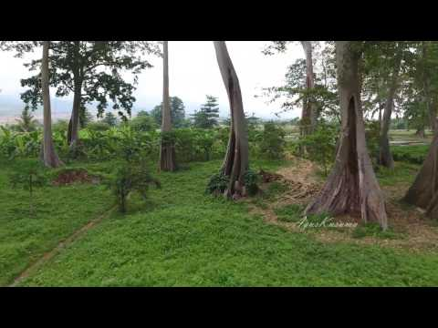 Terbang di area pohon purba, lombok timur