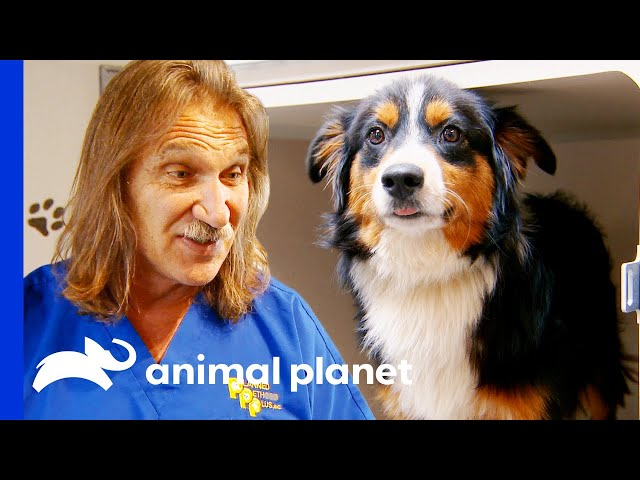 Scared Dogs Are Saved From a Puppy Mill | Dr. Jeff Rocky Mountain Vet