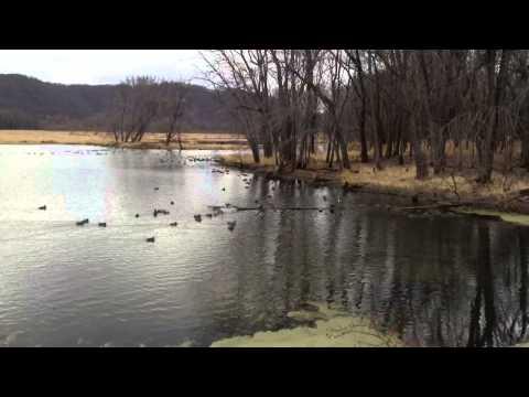 Duck Migration; Upper Mississippi Wildlife Refuge November