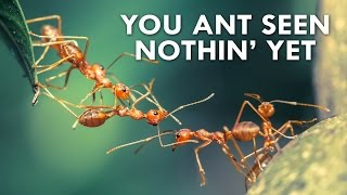 The Amazing World of Ants