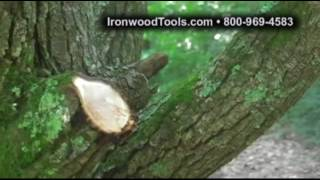 Trimming a Bradford Pear with IW1425 Telescoping Ratchet Lopper