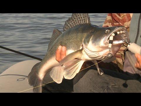 """Рыбак Рыбаку 511 """"Ловля судака на водохранилище""""."""
