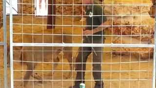 Safari Zoo Mallorca - Raubtiershow