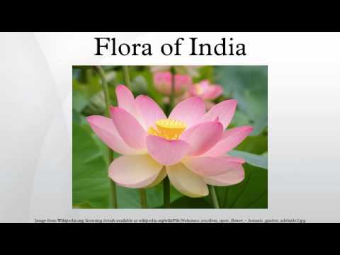 List of Rare and Endangered Indian Plants