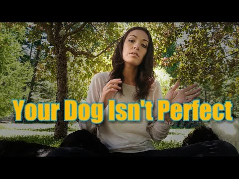 Your Dog Isn't Perfect