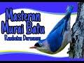 Masteran Murai Batu  Mp3 - Mp4 Download