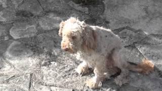 Cão depois de um corte de pêlo-Rescued dog after a hair job