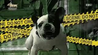 세상에 나쁜 개는 없다 - 가정 파괴견 포스와 신혼부부의 위기_#003
