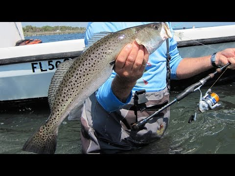 Saltwater Trout Fishing Lures - 3 Monster Spotted Seatrout on DOA shrimp