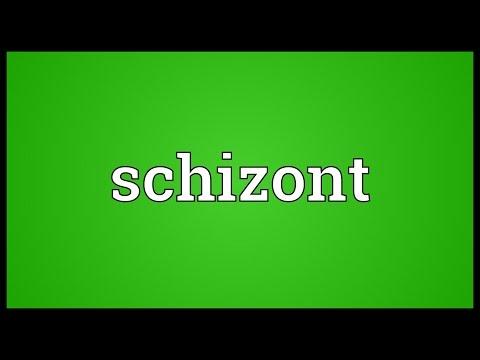 Header of schizont