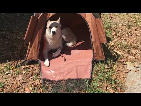 Product Review – Roraima Instant Dog Tent #dogtent #RORAIMA