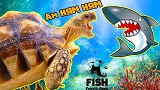 Я БОЛЬШАЯ ХИЩНАЯ РЫБА #2 веселое видео   в необычной игре Feed and Grow Fish от FGTV