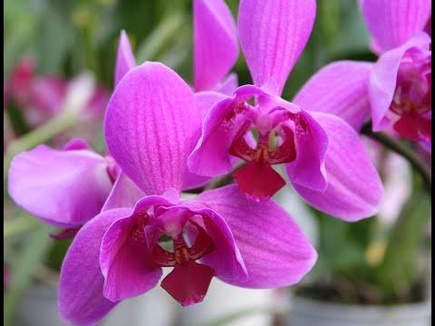 انطلاق معرض زهرة الأوركيد في نيويورك  - نشر قبل 4 ساعة