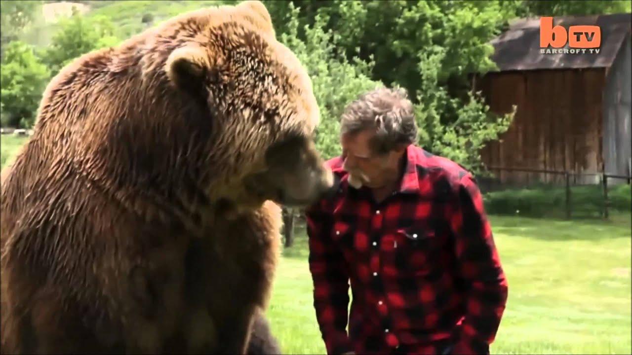 медведь животное