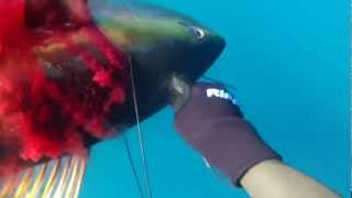 WIDOWMAKER YELLOWFIN TRIP 2012