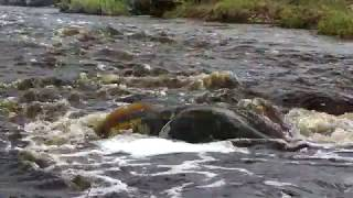 Река Лава: Каньон, которому больше 400 миллионов лет в 4К