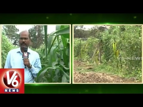 Composite Agriculture | Benefits and Profits to Farmers with Composite Farming | V6 News